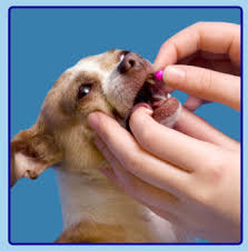 Dog Arthritis Medication Pill Dog Arthritis is a common affliction in dogs, particularly males between 4 and 7 years, efficiently addressed by Pet Bounce supplement