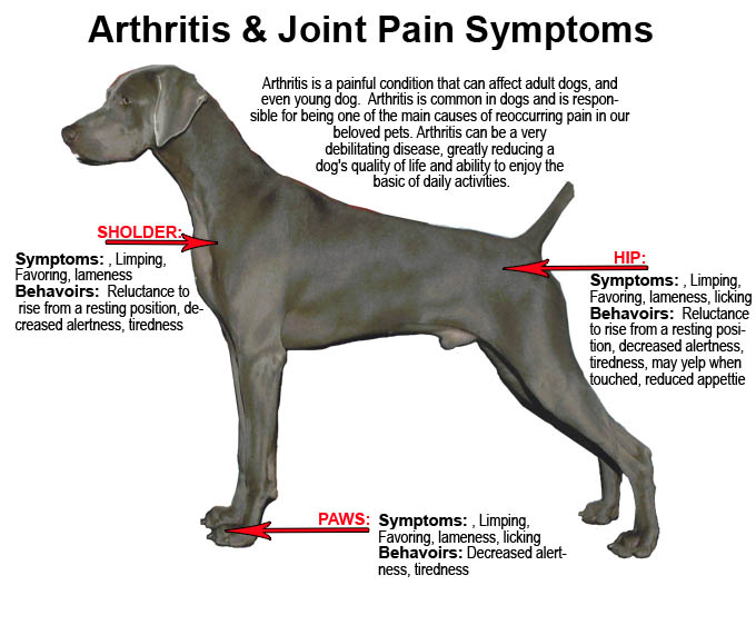 Dog Arthritis Supplement Dog Arthritis Supplement includes neutraceuticals, steroids, NSAIDs and last but never the least, Pet Bounce oral spray