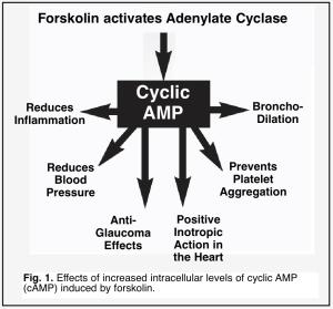 Forskolin injections for erectile