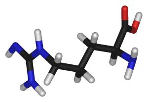 L Arginine 300x206 L Arginine and its Importance to Muscle Mass Development