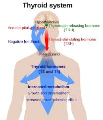 Thyroid Condition Thyroid Condition reversible with prescribed Levothyroxine therapy and natural Thypro supplement intake