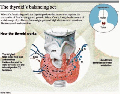 Thyroid Imbalance Thyroid Imbalance attributable to 9 known causes and treatable with Thypro supplemental intake